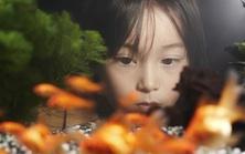 hiroshima-erbe-fish-preview
